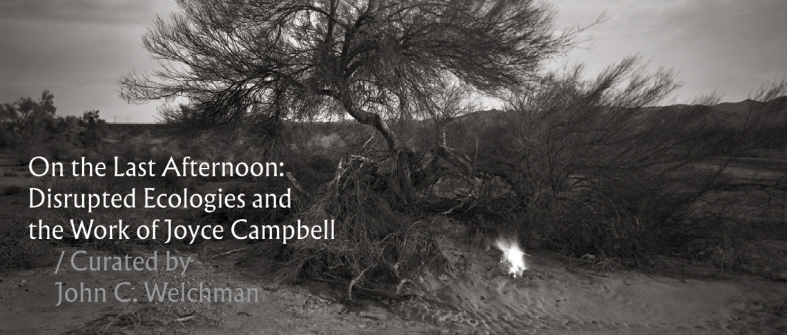 On the Last Afternoon: Disrupted Ecologies and the Work of Joyce Campbell